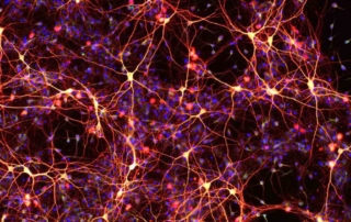 Neurons made from chemically-induced neural precursors.