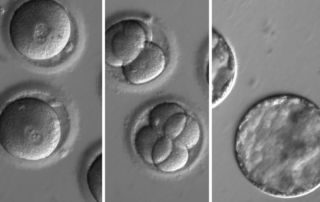 Editing DNA in human embryos